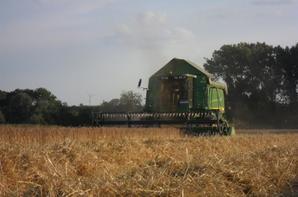 Moisson avec Moissonneuse John Deere 9640WTS ( 6m) et Agrotron K110 et Benne Rolland