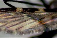 Le paradis des insectes