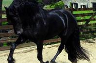 Des chevaux <3