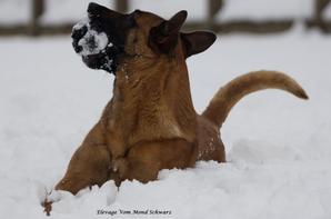 Ma Guess qui adore la neige