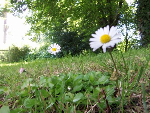 fleurs en vrac
