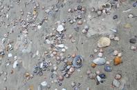 # Waihi beach