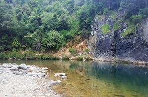 # Coromandel Forest Park