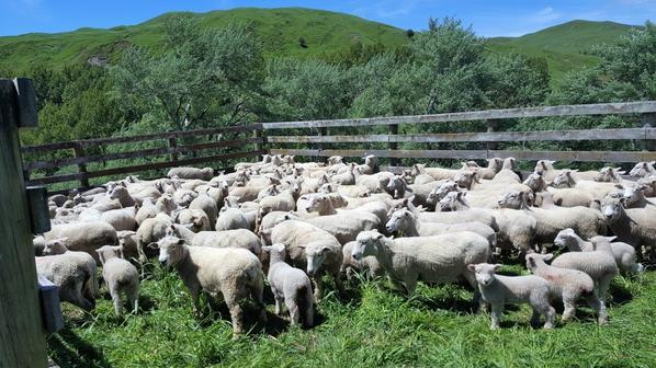 # helpx 2 : Marquage des agneaux
