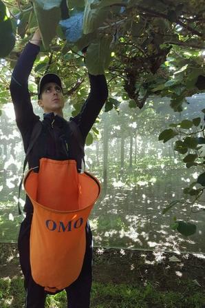 # Kiwi flower picking - jobs n°1