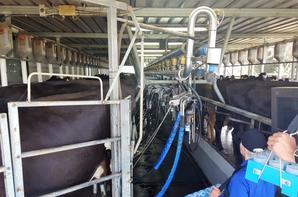 # Traite des vaches