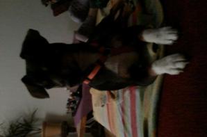 le chien de ma grand mére