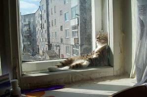 Histoires de chats.