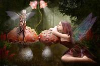 Champignons magiques et êtres féeriques