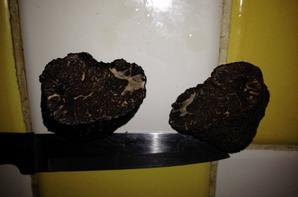 Grosse année pour les truffes !