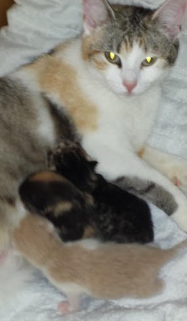 bébé chaton de 4 jour née le 10 mai a 17 H 15