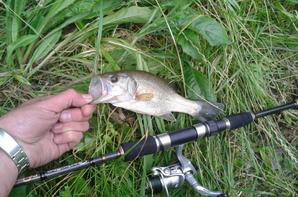 black bass a vue en rock fishing