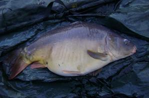 petite pêche en hiver 2013