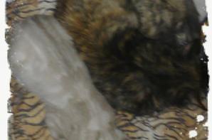 Poop et Lili