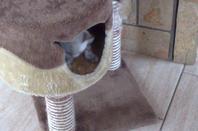 Présentation de Filou avec Poop
