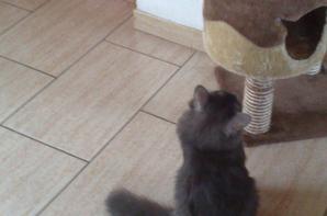 Poop fait mumuse avec Filou