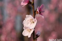 Fleurs du printemps