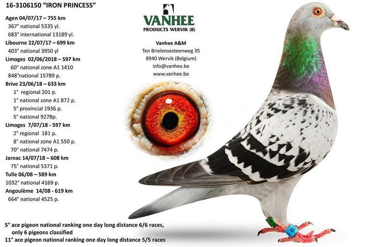 Vente Francolomb.com ( Union de Fourmies )N° 34 : VANHEE Annemie BELGIQUE