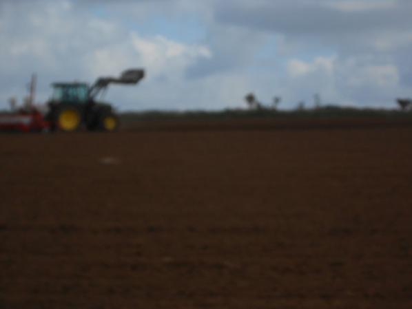 Semis de mais grain