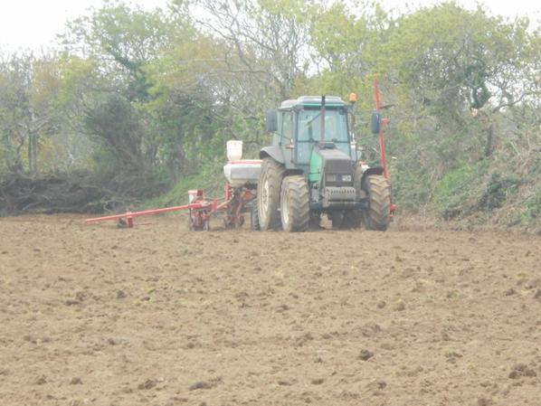 Semis de maïs 2013