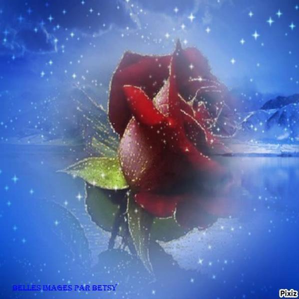 mon amie la rose!!!!!!!!!!!!!!!