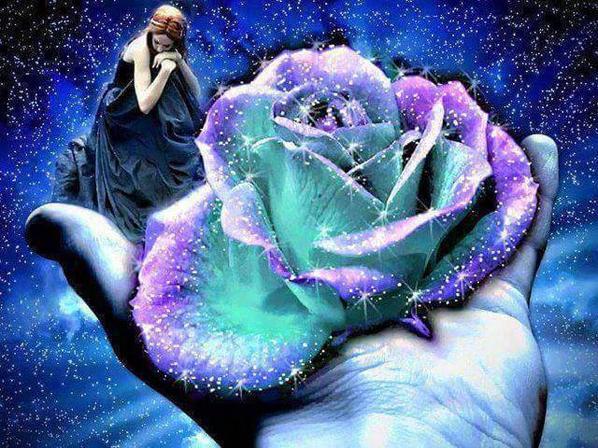 pour l amour d une rose!!!!!!!!!!!!!!!!