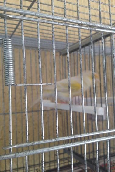couple femelle blanche satiné male mosaique jaune pastel