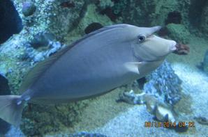 poisson océan indien ,un oiseau attend le menu