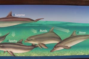 dauphins (petit nom donner à chacun )