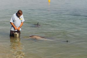 pélicans,émeus et dauphinsdans leurs milieu naturel