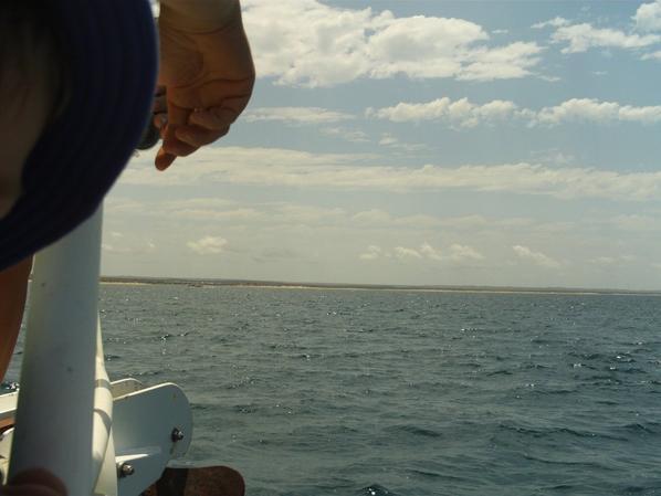 Baleine !! oui c'est loin