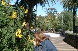 Parque Garcia Sanabria (tenerife)
