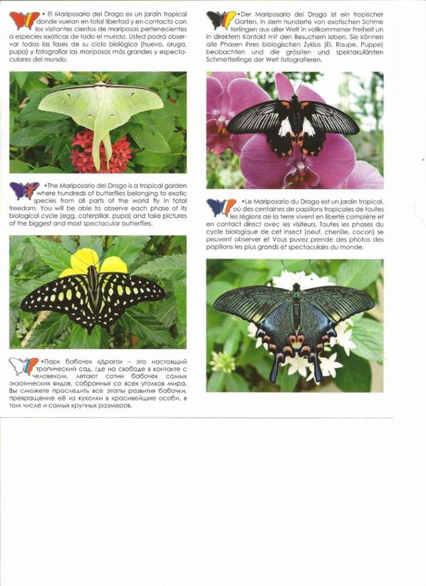 Papillons , visite libre,Tenerife 922 815 167