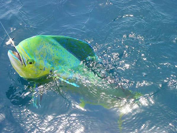 Ce n'est pas le pêcheur qui prends le poisson ,mais c'est le poisson qui s'offre aux pêcheurs.