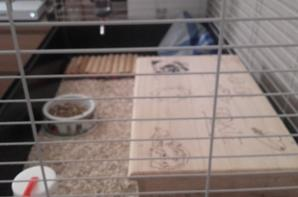 voila un cage et un enclos tous propre