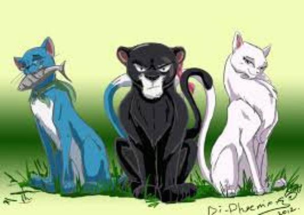 nos trois felin préférer