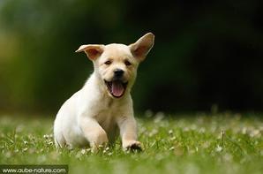 Le meilleur ami de l'homme n'est autre que le chien. †