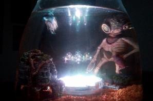 Marley, mon poisson combattant