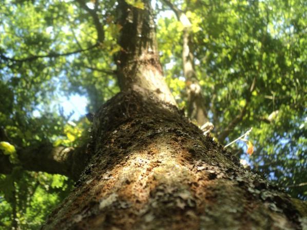 Petite échappatoire dans les arbres