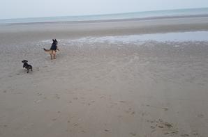 Balade dans les dunes et la plage du nord