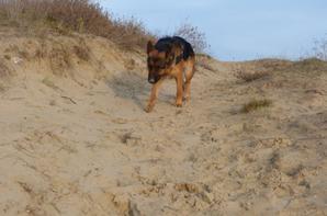 petite balade dans les Dunes