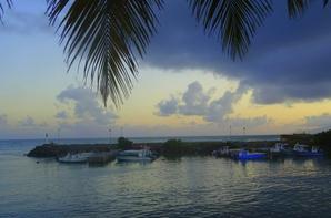 envol de pélicans avant le plongeon pour se nourrir apres le coucher du soleil