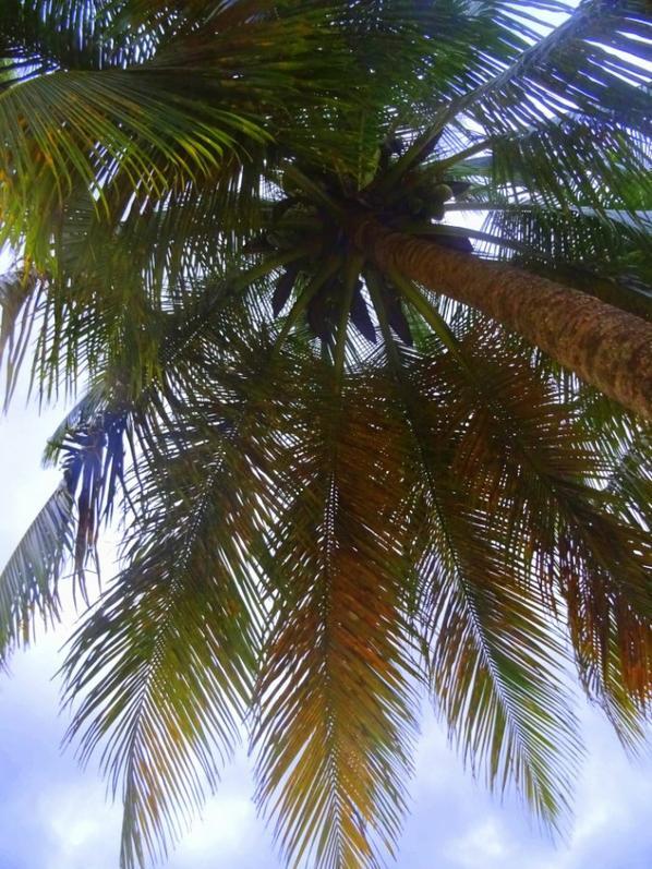 à l'ombre sous les palmiers
