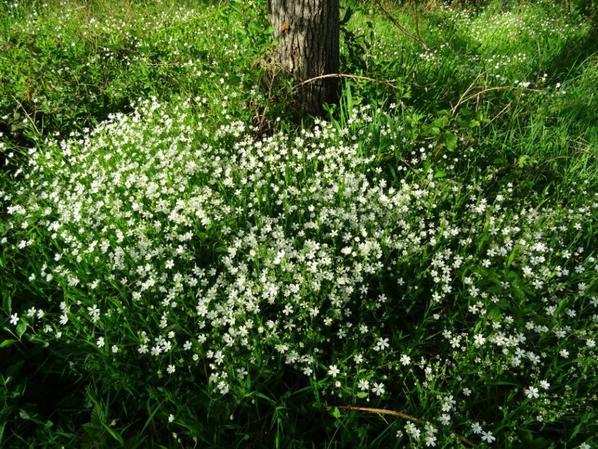 tapis de fleur