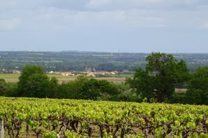 joli point de vue du haut des vignes