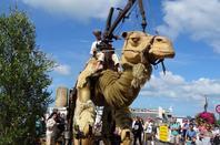 un chameau en bretagne lol