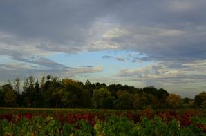 nos vignes en automne