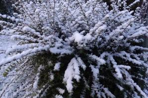 la neige de bon matin en ce 1 er décembre 2017