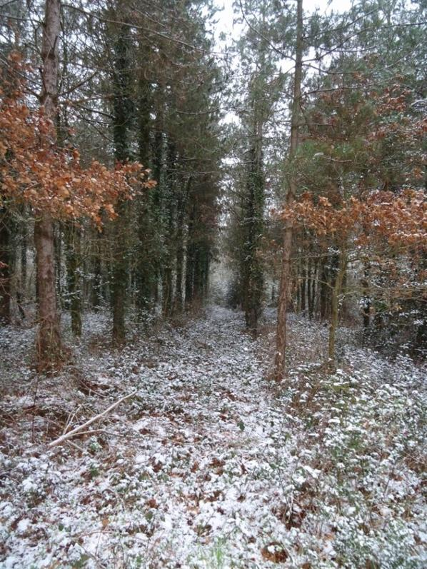 balade en forêt