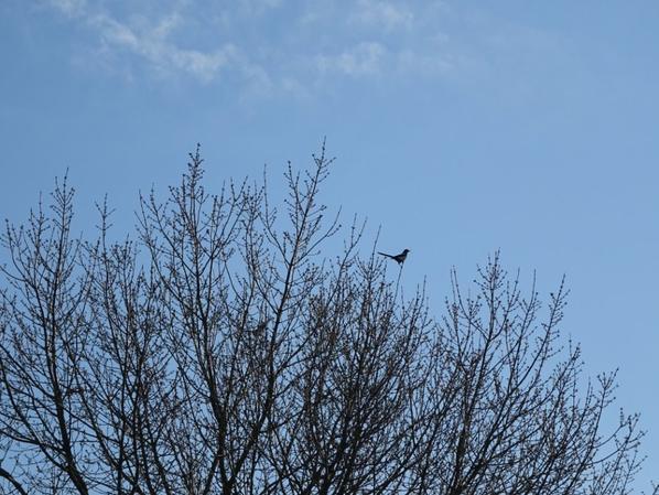 beau ciel bleu aujourd'hui